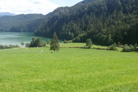 Unsere Wiese am See
