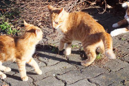 Wer ist hier 'Katzenkönig'