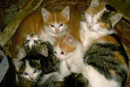 Minka hat 5 Junge